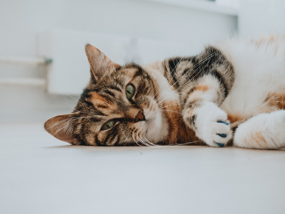 brown tabby cat lying on white surface