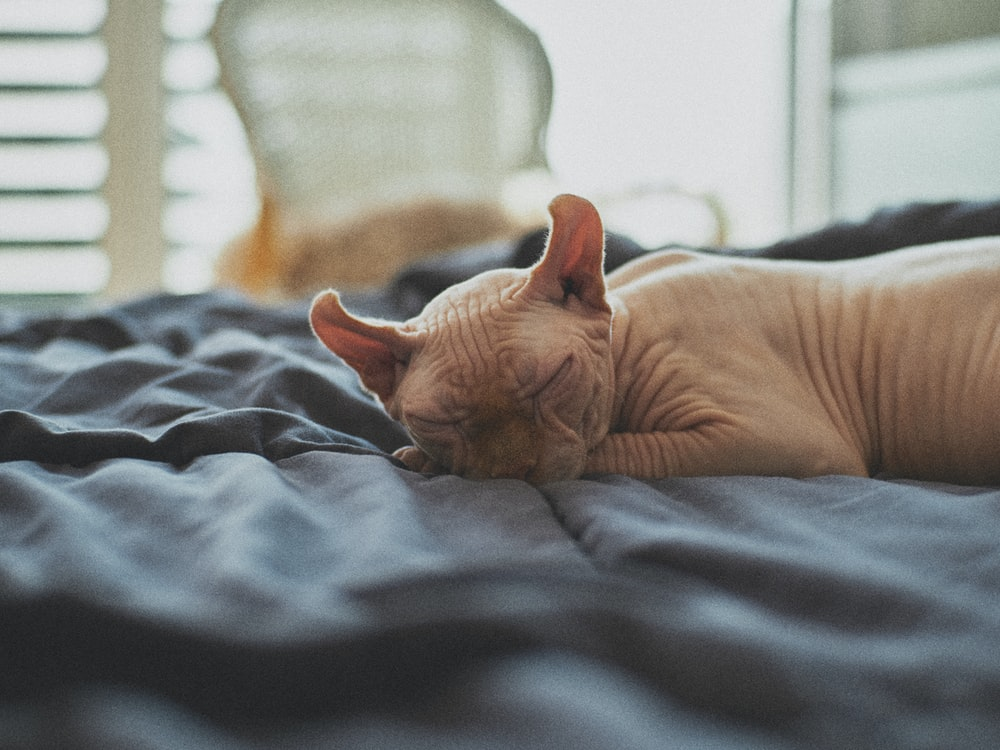 brown cat lying on bed