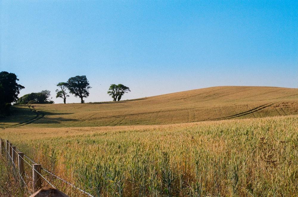 green grass field near green trees under blue sky during daytime
