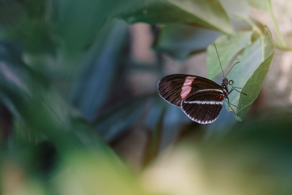 black and brown butterfly perched on green leaf in close up photography during daytime
