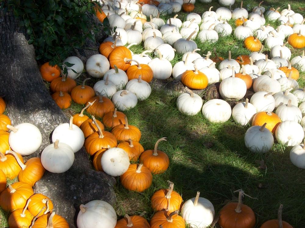 white and orange pumpkins on green grass during daytime