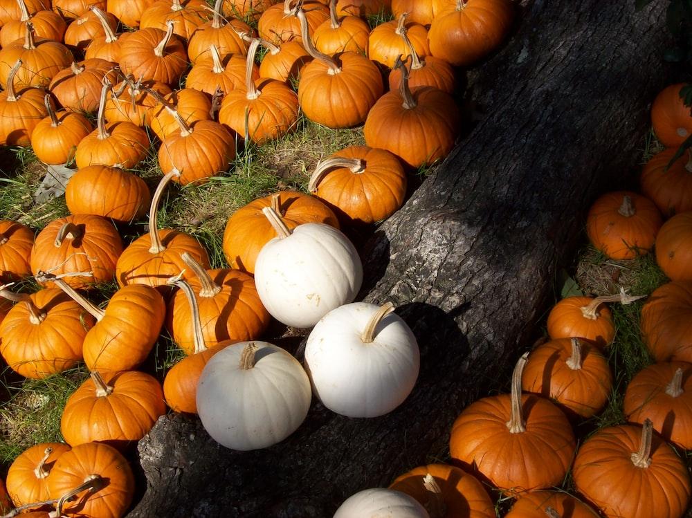 orange pumpkins on brown tree trunk