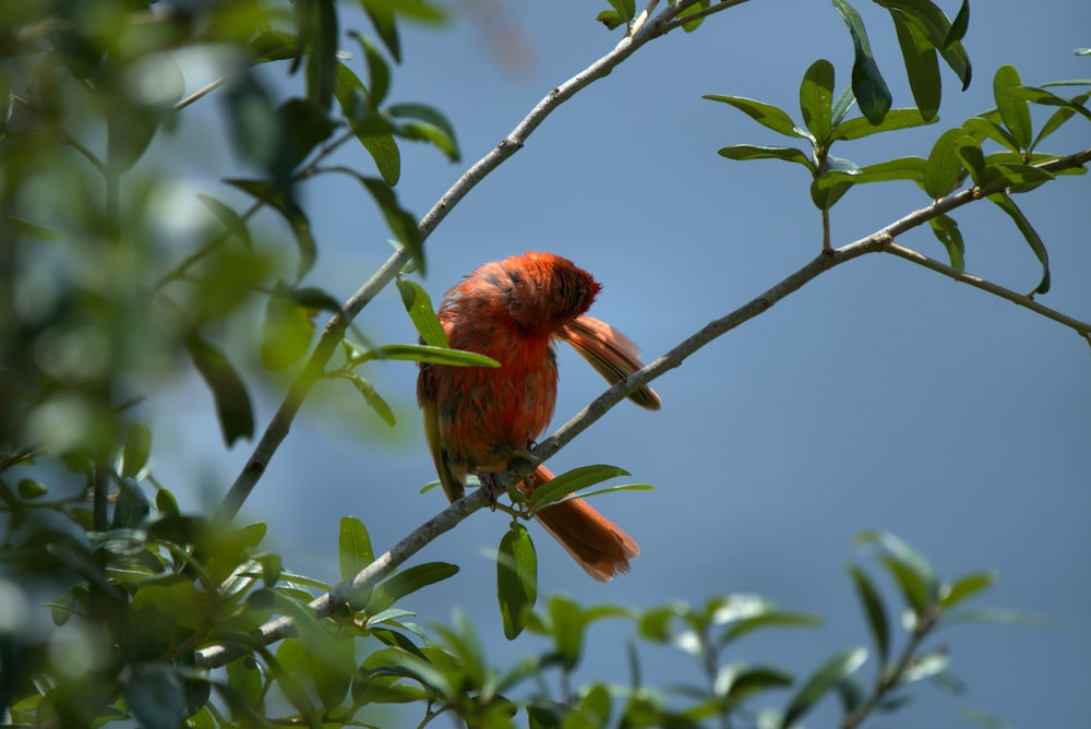 red and brown bird on tree branch during daytime