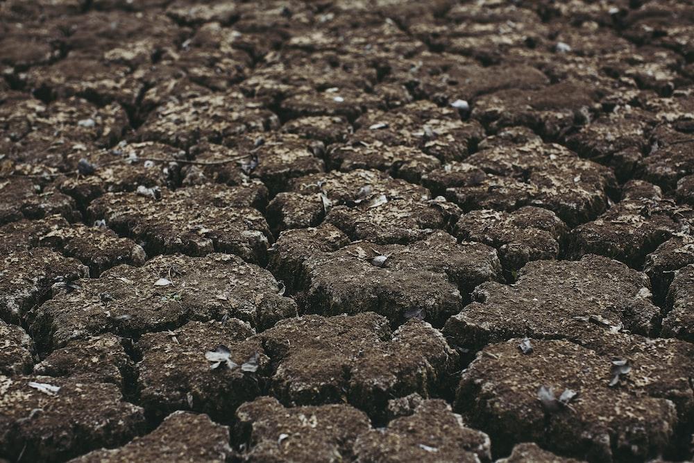black stones on brown soil