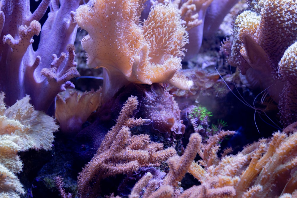yellow coral reef in clear glass tank