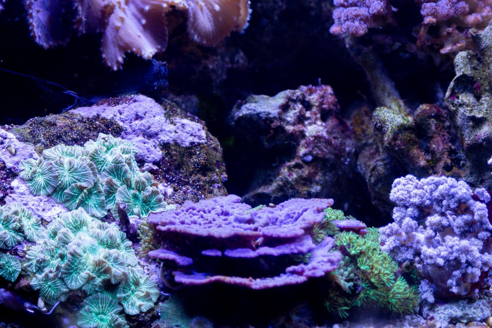 blue and white coral reef