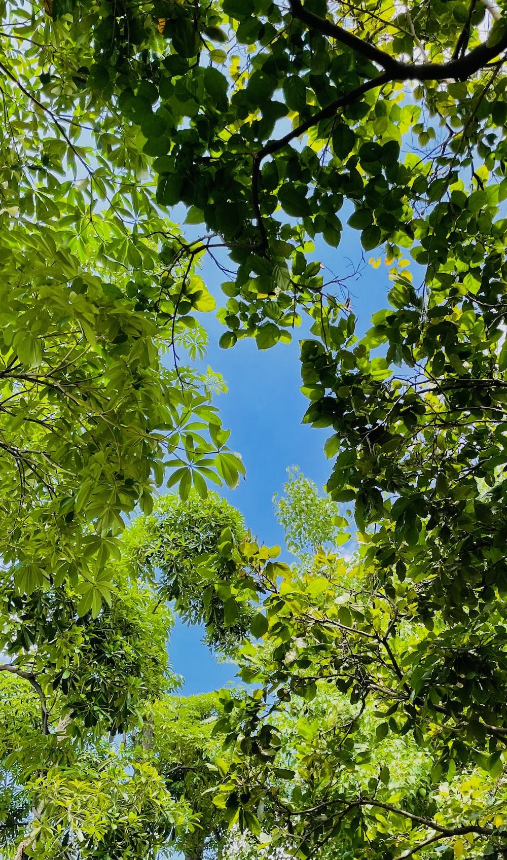green leaves under blue sky during daytime