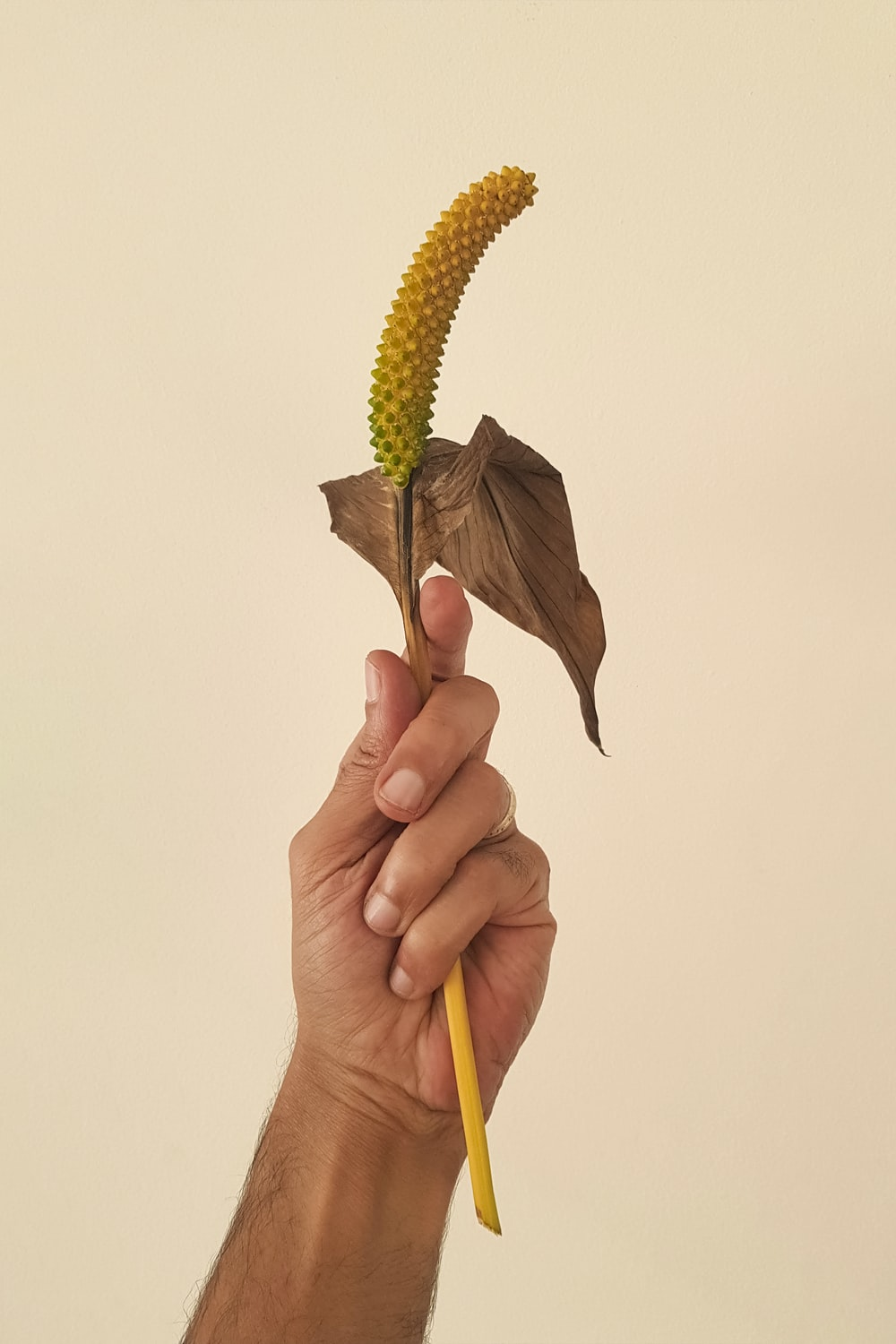 person holding yellow and green plant