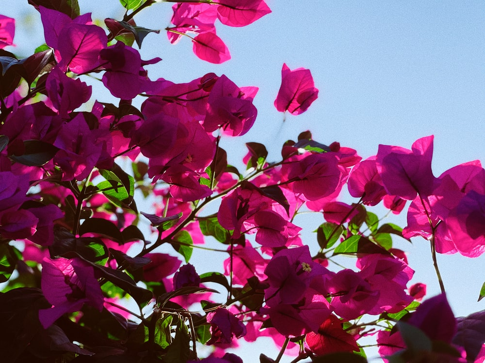 pink and green leaves under blue sky during daytime