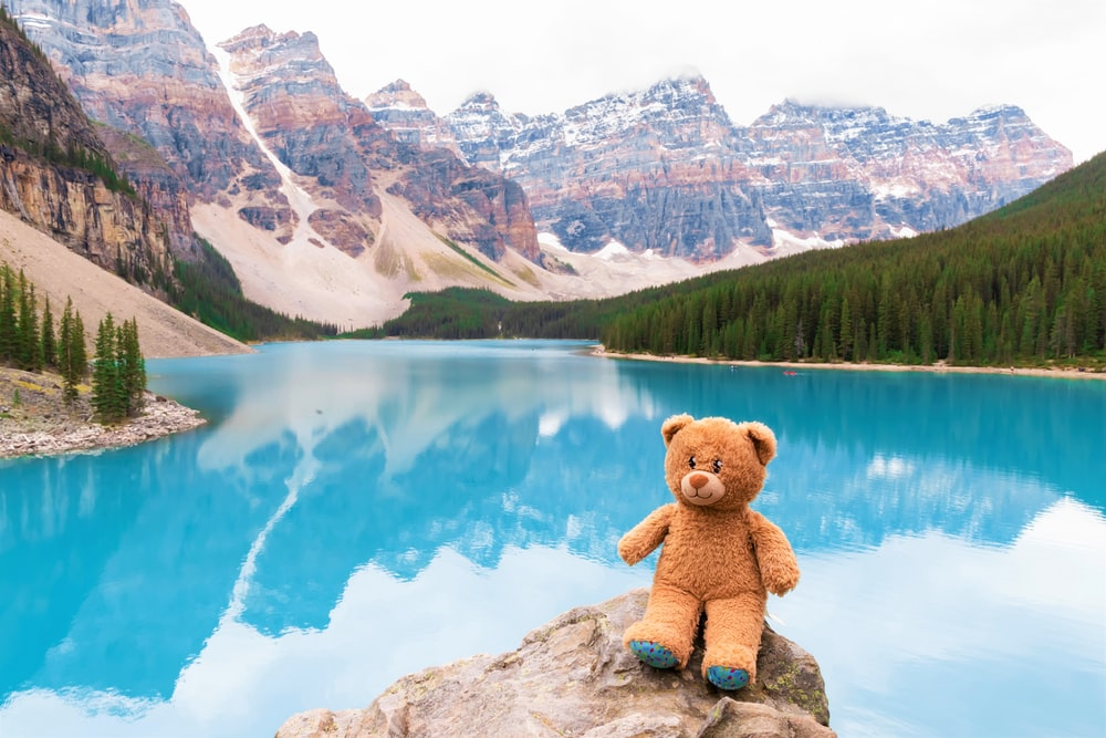 brown bear plush toy on rock near lake during daytime