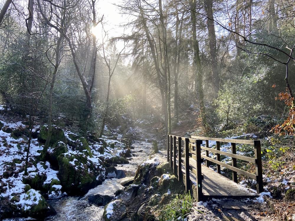 brown wooden bridge over river between trees during daytime
