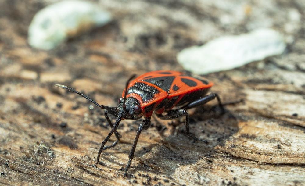 orange and black beetle on brown rock during daytime