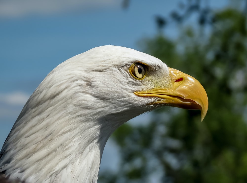 white eagle in close up photography