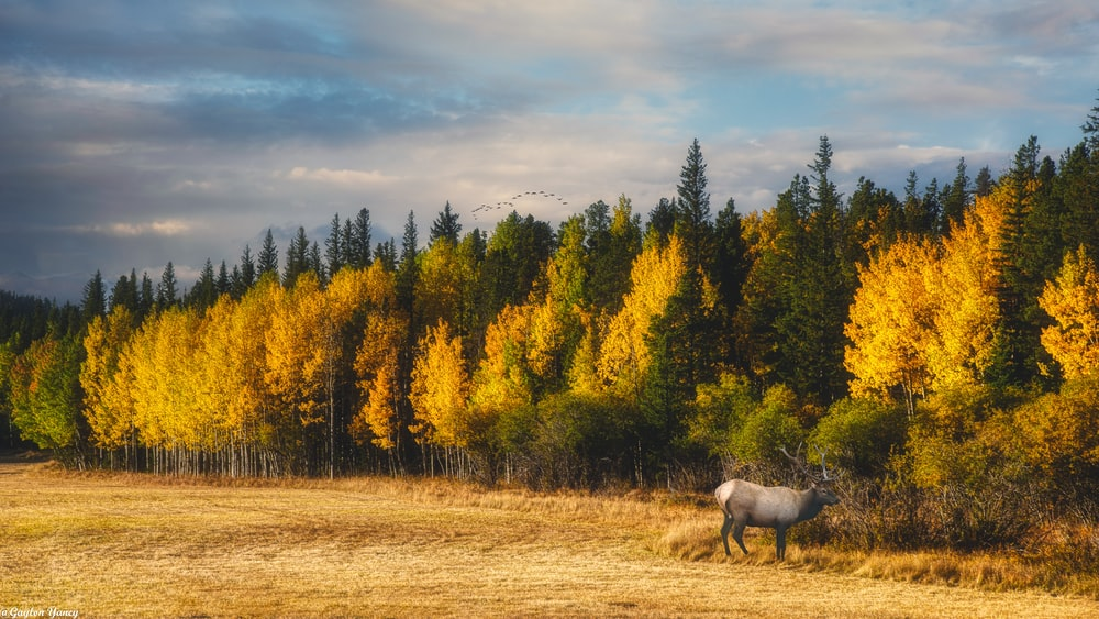 white horse on brown grass field near yellow trees during daytime