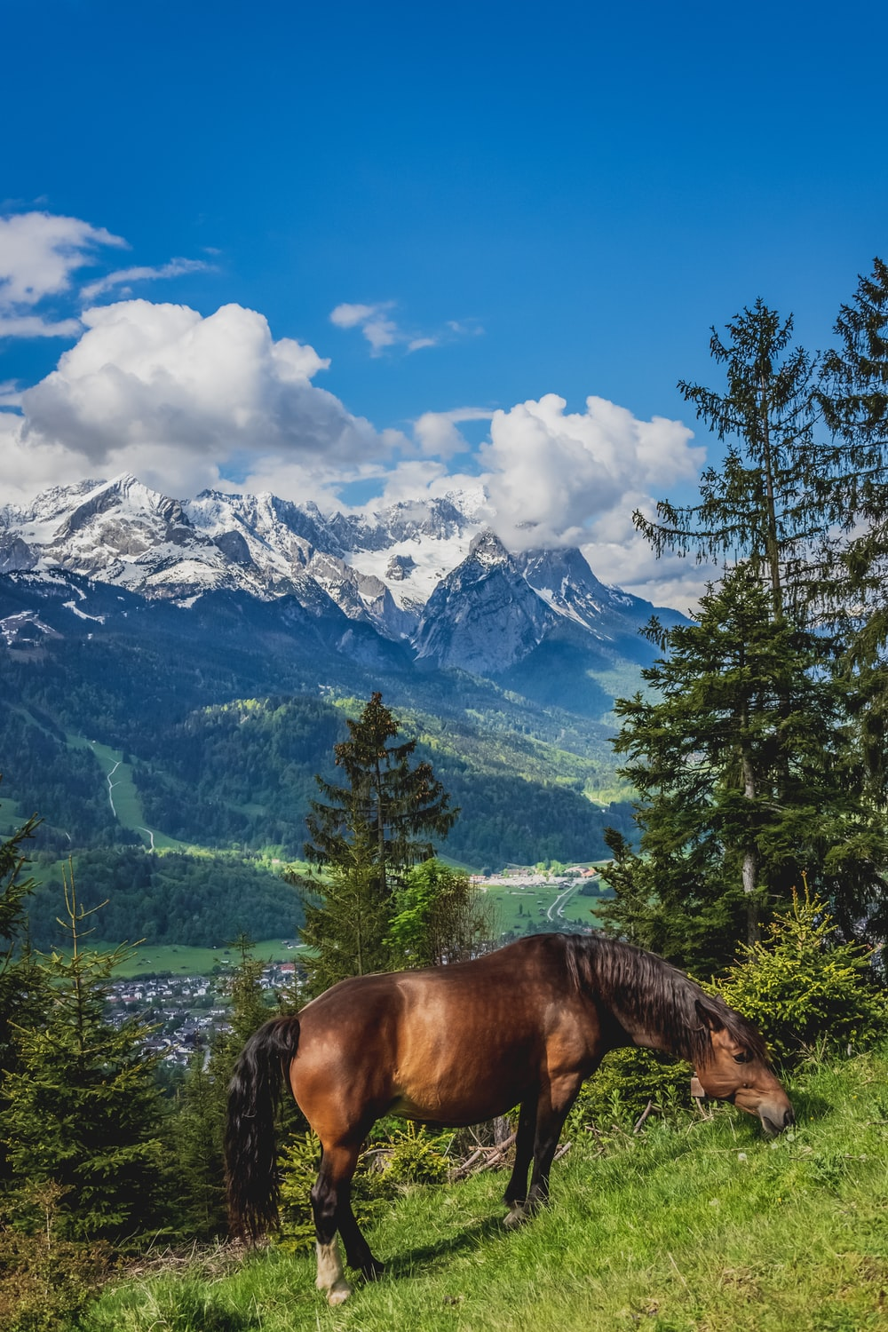 brown horse on green grass field near green trees and snow covered mountains during daytime