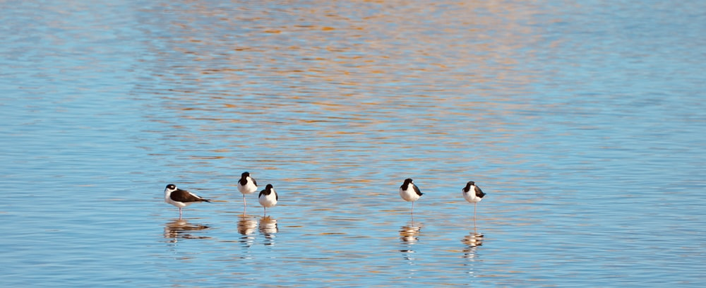 white and black birds on water during daytime