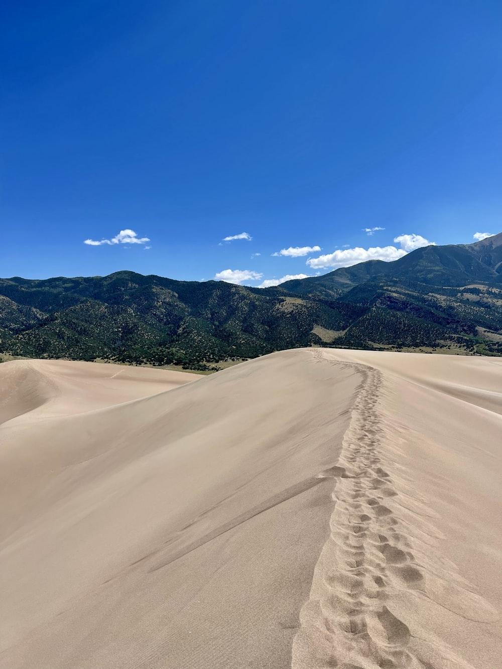 brown sand field with green trees and mountains in the distance