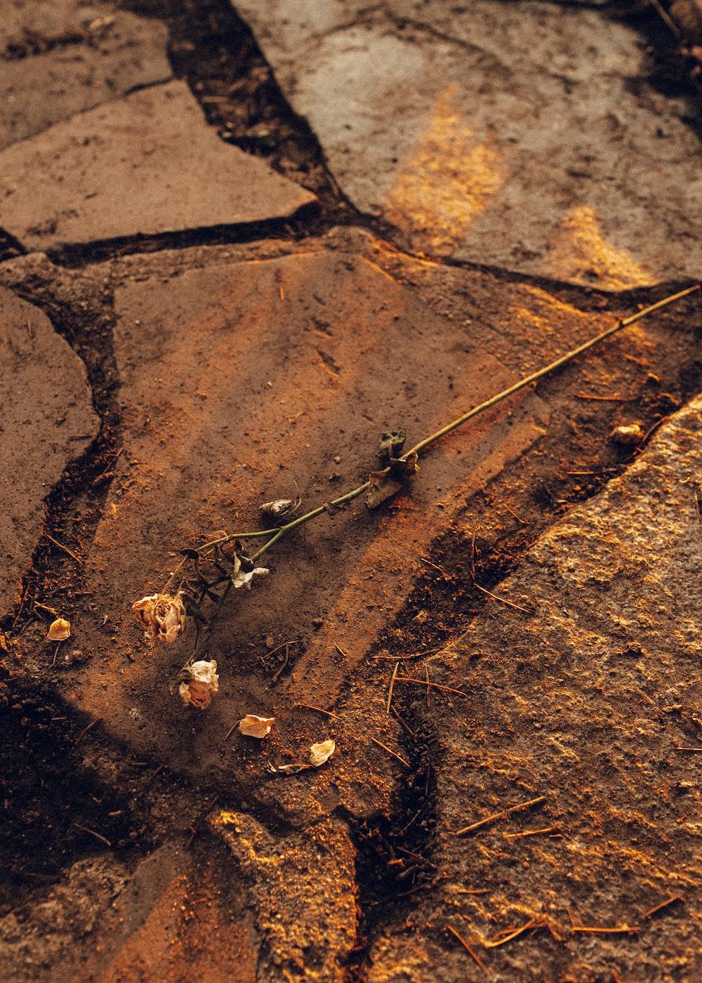 brown dried leaves on brown soil