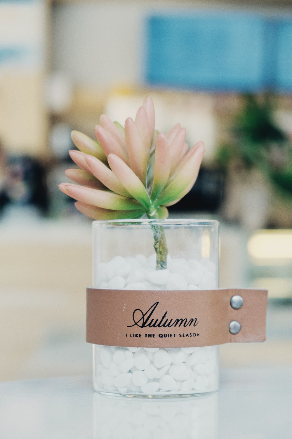 white and pink flower in clear glass jar