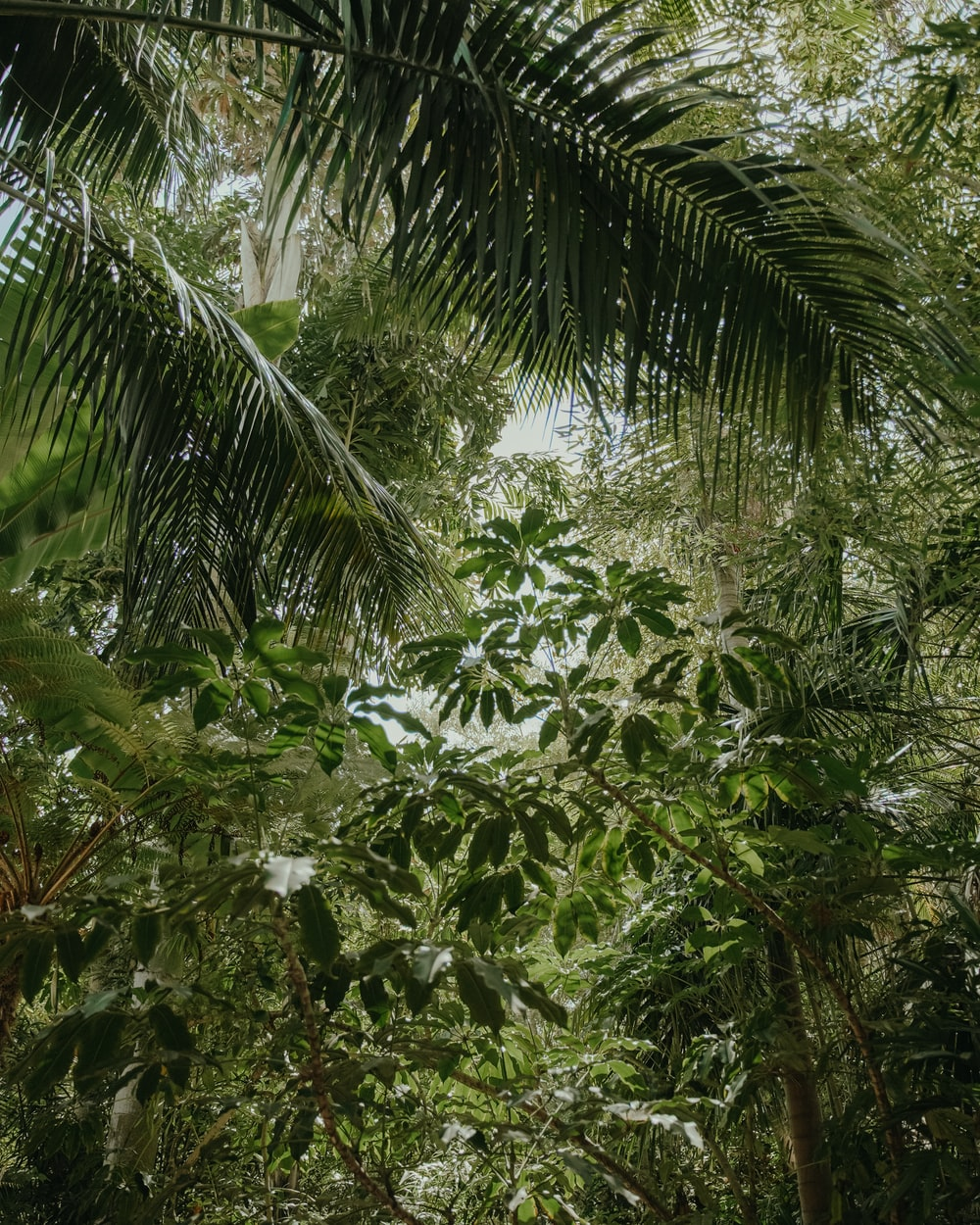green coconut tree under white sky during daytime