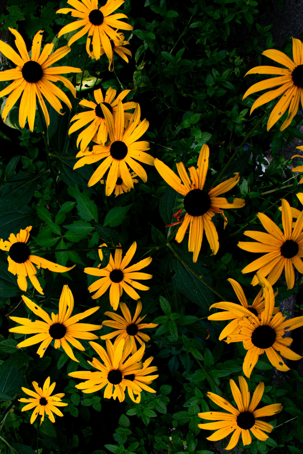 yellow and black flowers with green leaves