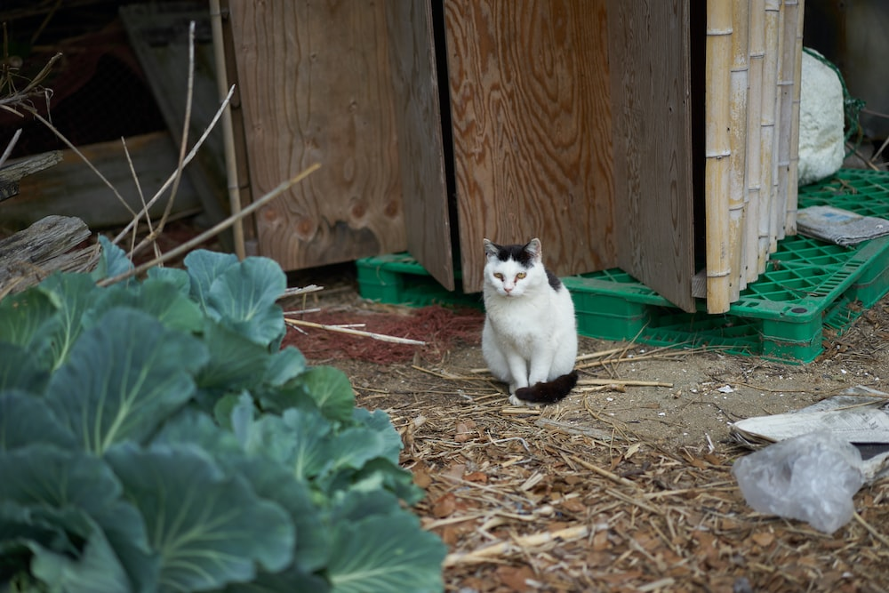 white and black cat on brown dried leaves