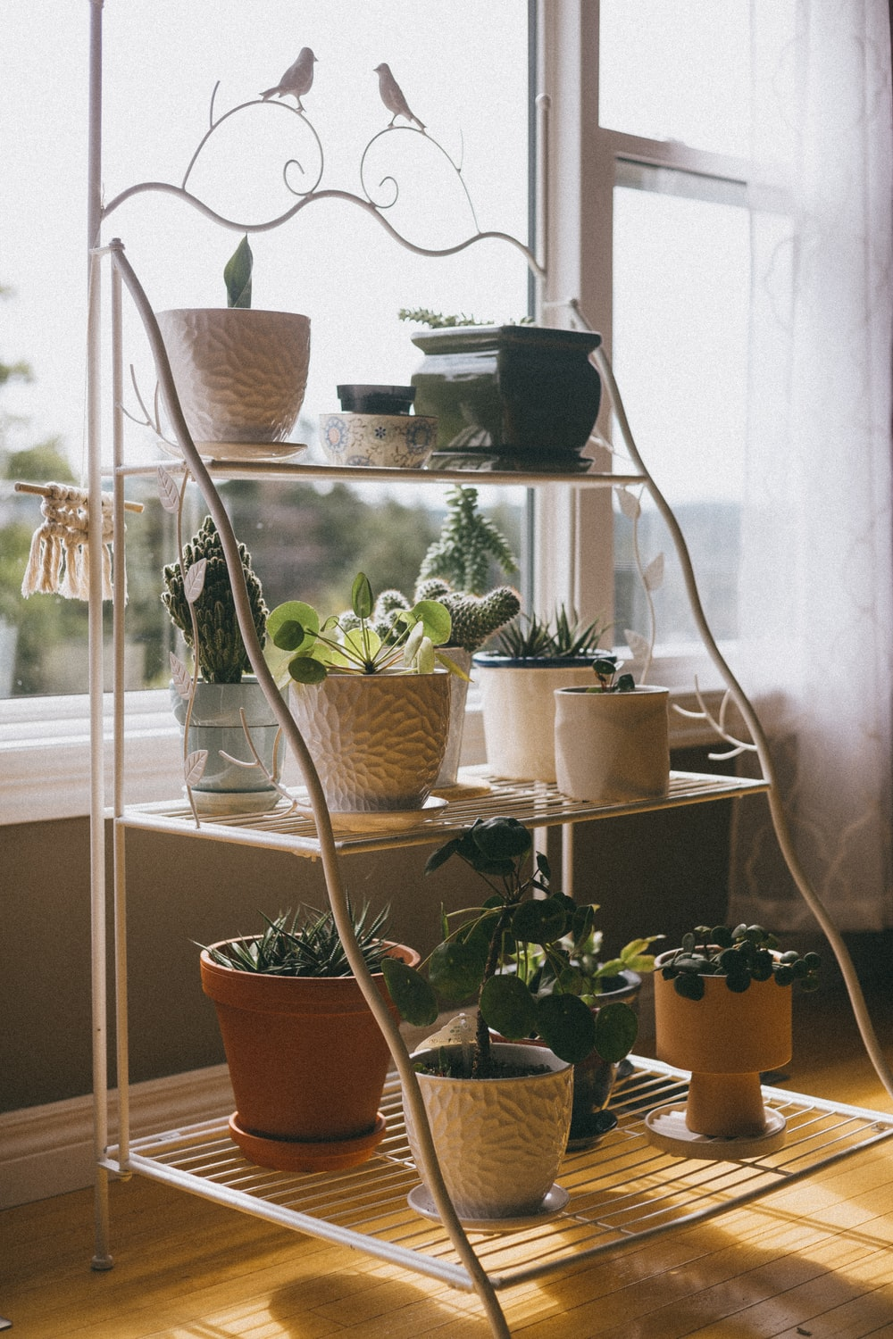 green potted plant on white metal shelf