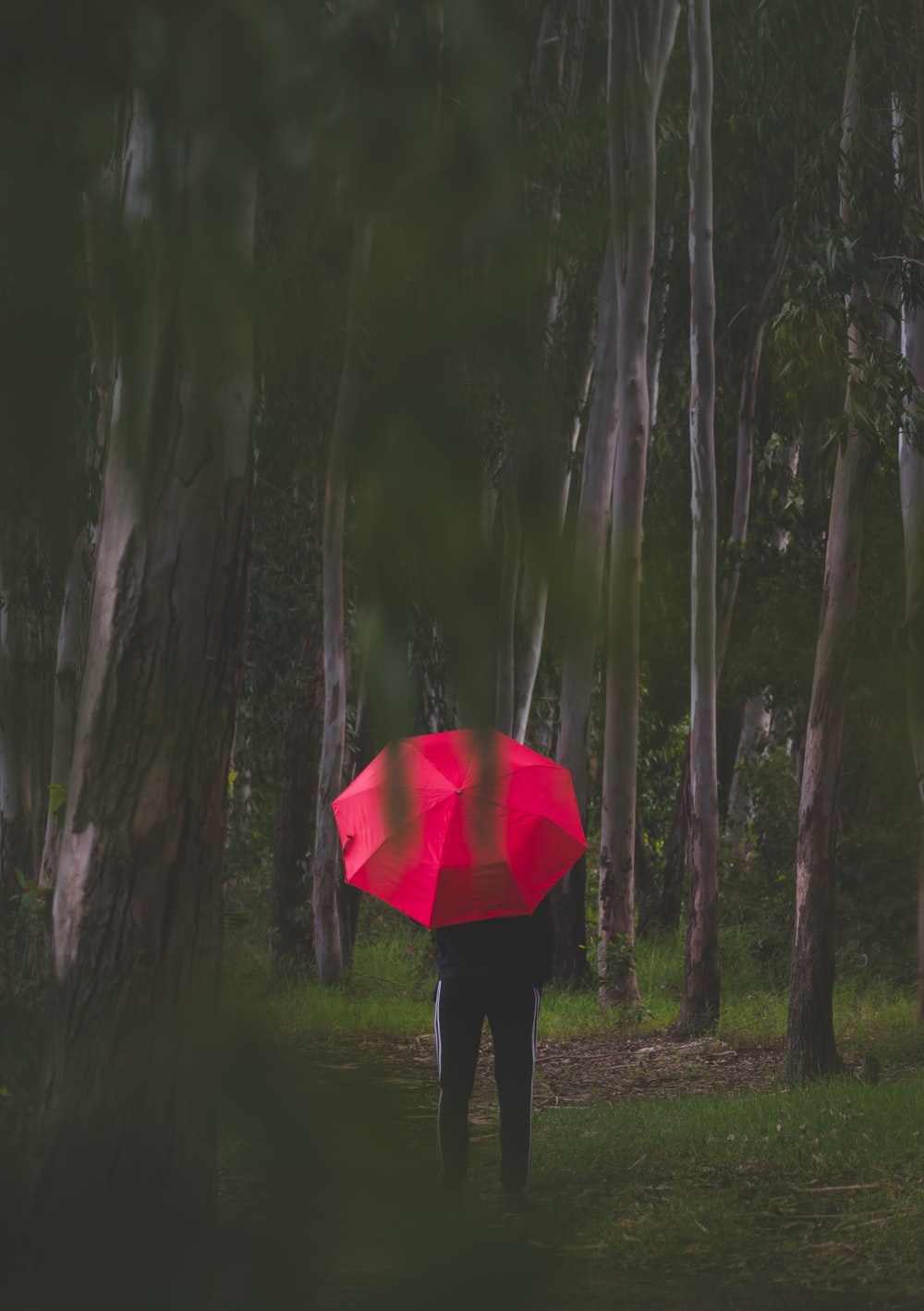 person in black jacket holding red umbrella standing on green grass field surrounded by green trees