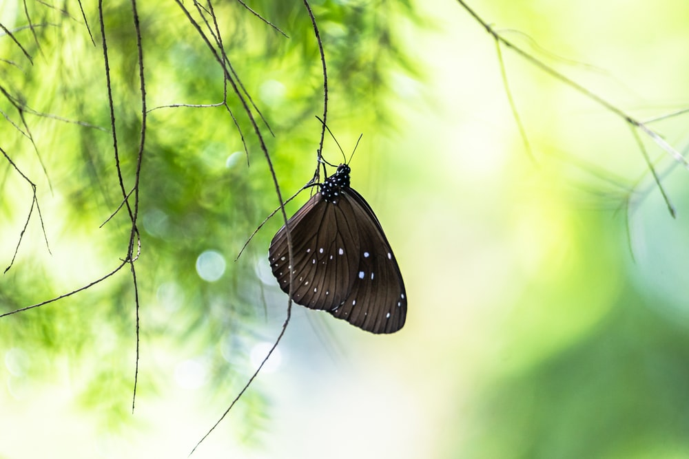 black and white butterfly perched on green leaf in close up photography during daytime