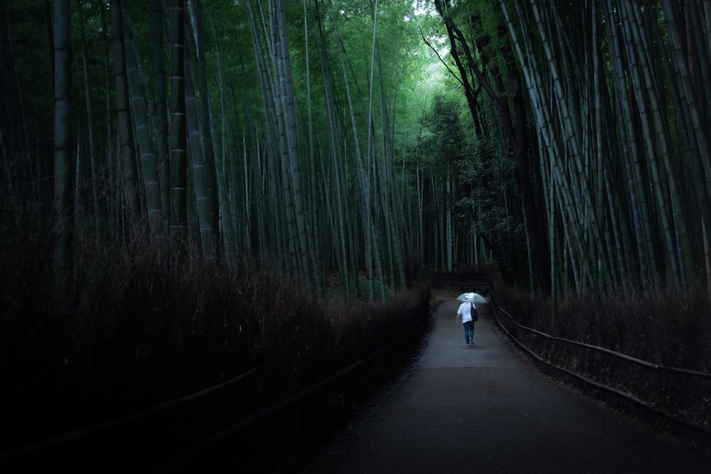 person in white shirt walking on road between trees during daytime