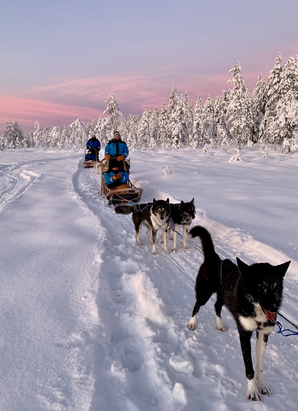 people riding on sled on snow covered ground during daytime