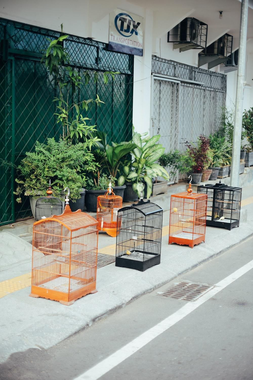 brown metal bird cage near green leaf plant