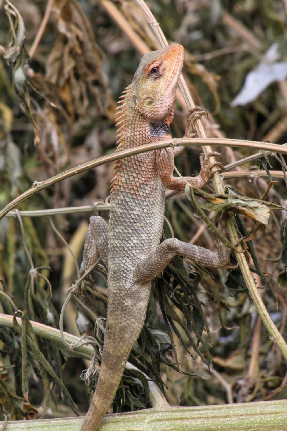 brown and black bearded dragon on brown tree branch during daytime