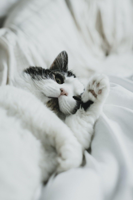 white and black cat on white textile