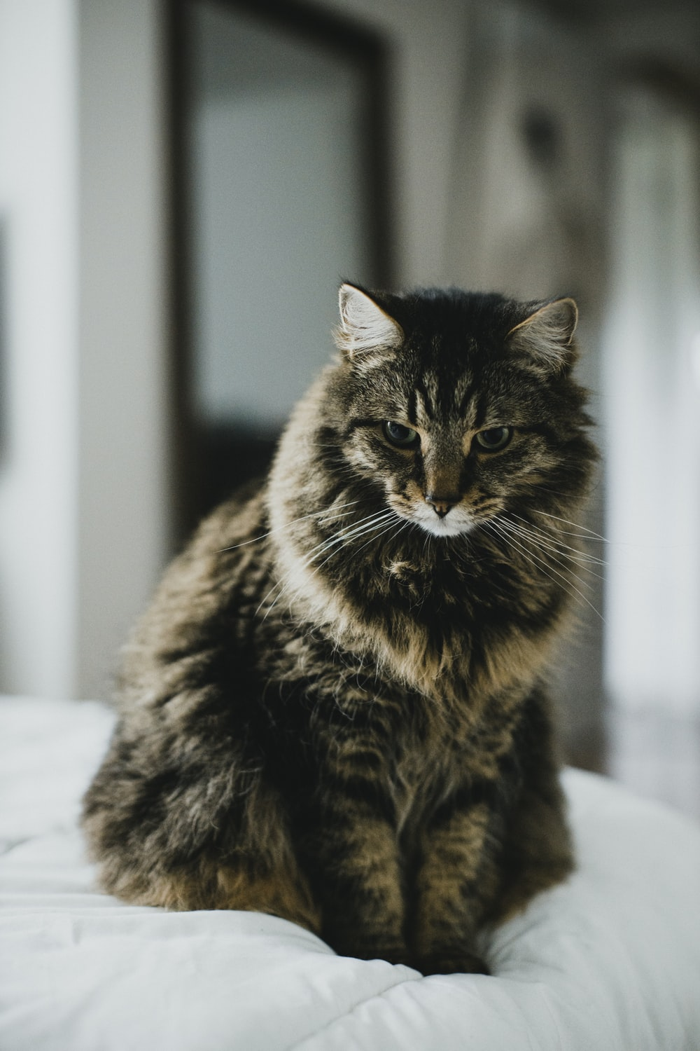 black and brown tabby cat on white textile