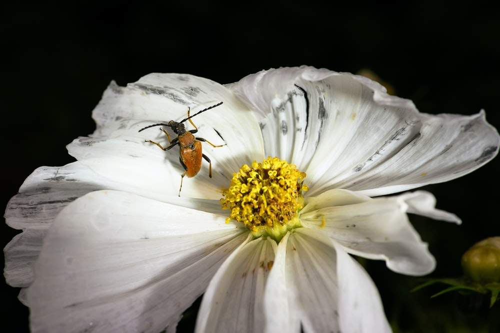 brown and black bee on white flower