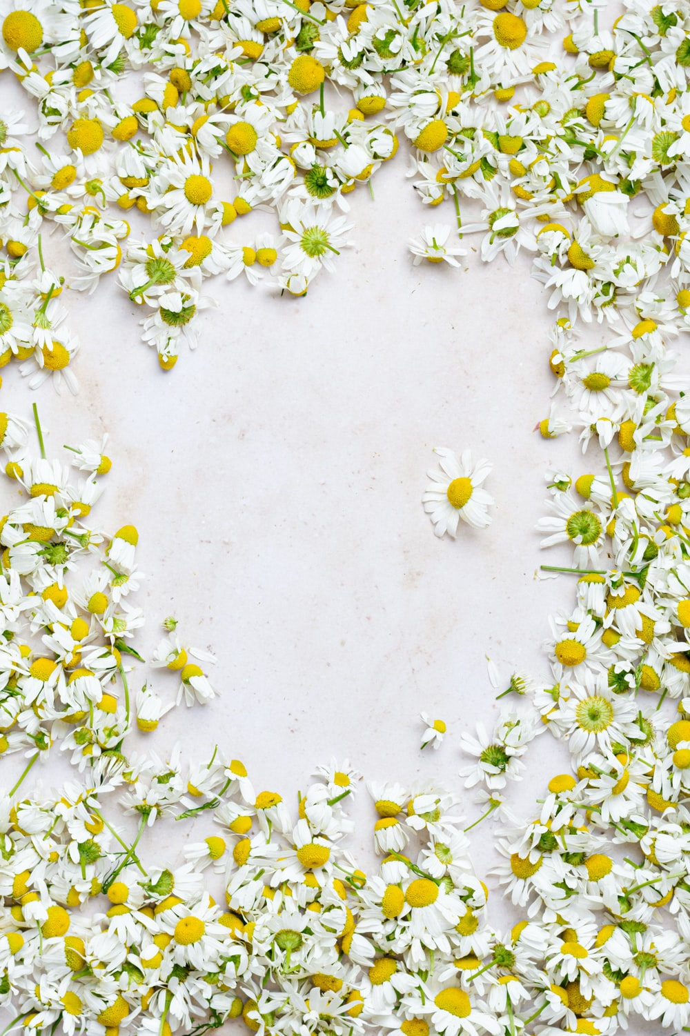 white and yellow flowers during daytime