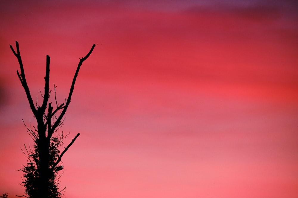 leafless tree under orange sky
