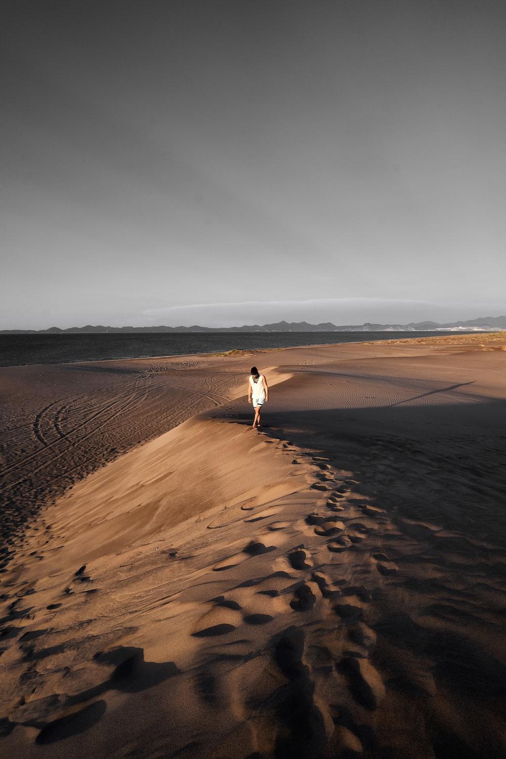 white bird on brown sand during daytime