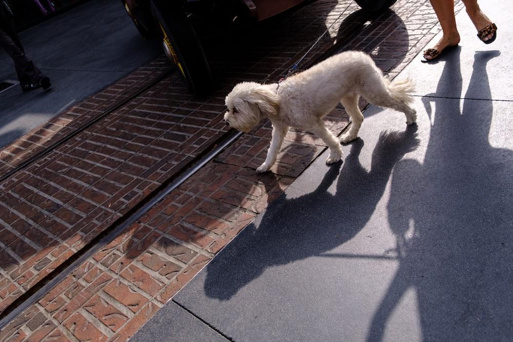 white short coated medium sized dog on gray concrete floor