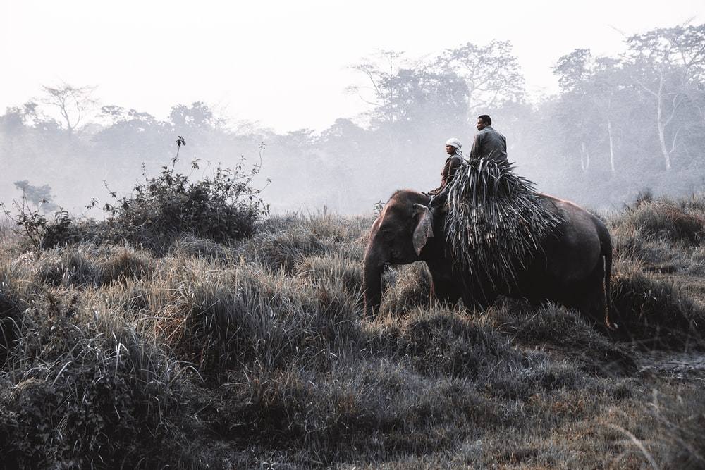 man riding on brown elephant during daytime