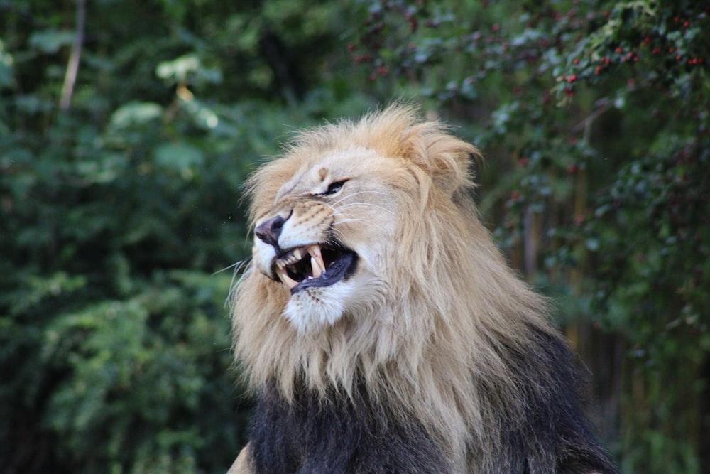 brown lion on black rock during daytime