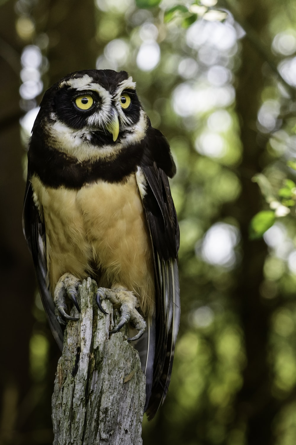 black and brown owl on tree branch