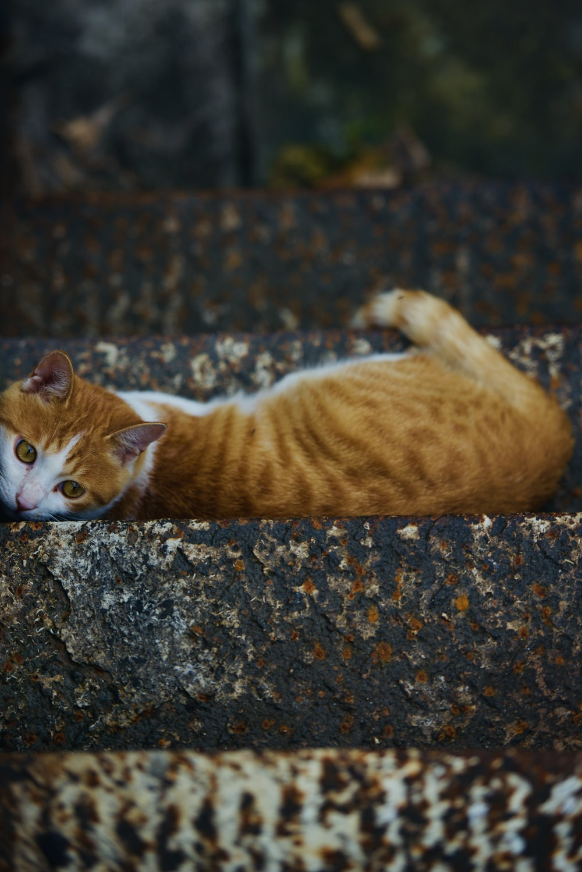 orange tabby cat lying on ground during daytime