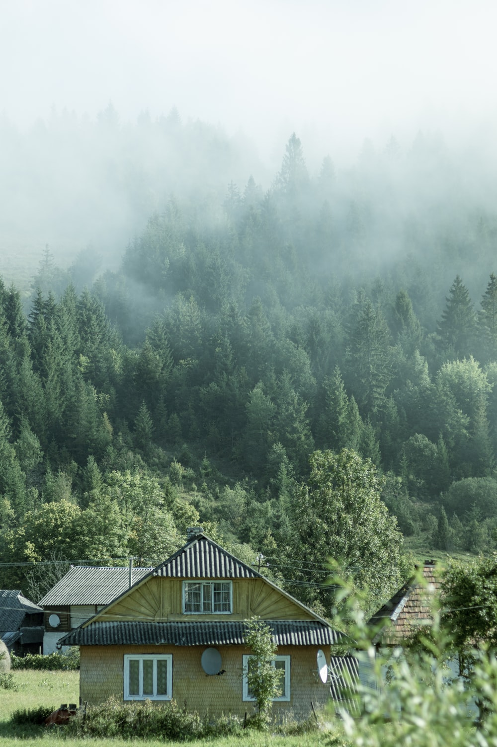 brown wooden house on green forest during daytime