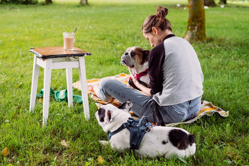 woman in gray shirt sitting on chair beside white and black short coated dog