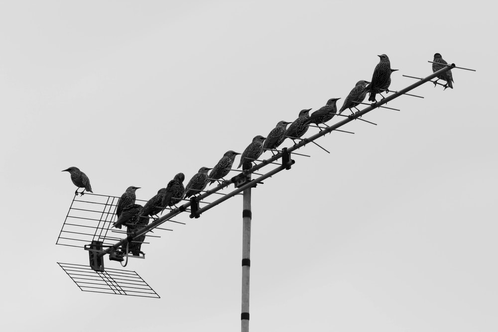 silhouette of birds on electric post