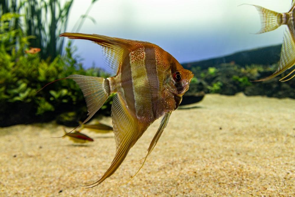 brown fish on brown sand during daytime