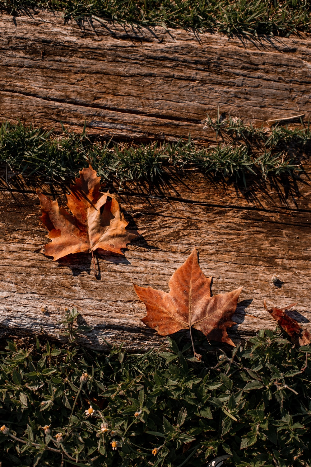 brown dried leaf on brown wooden surface