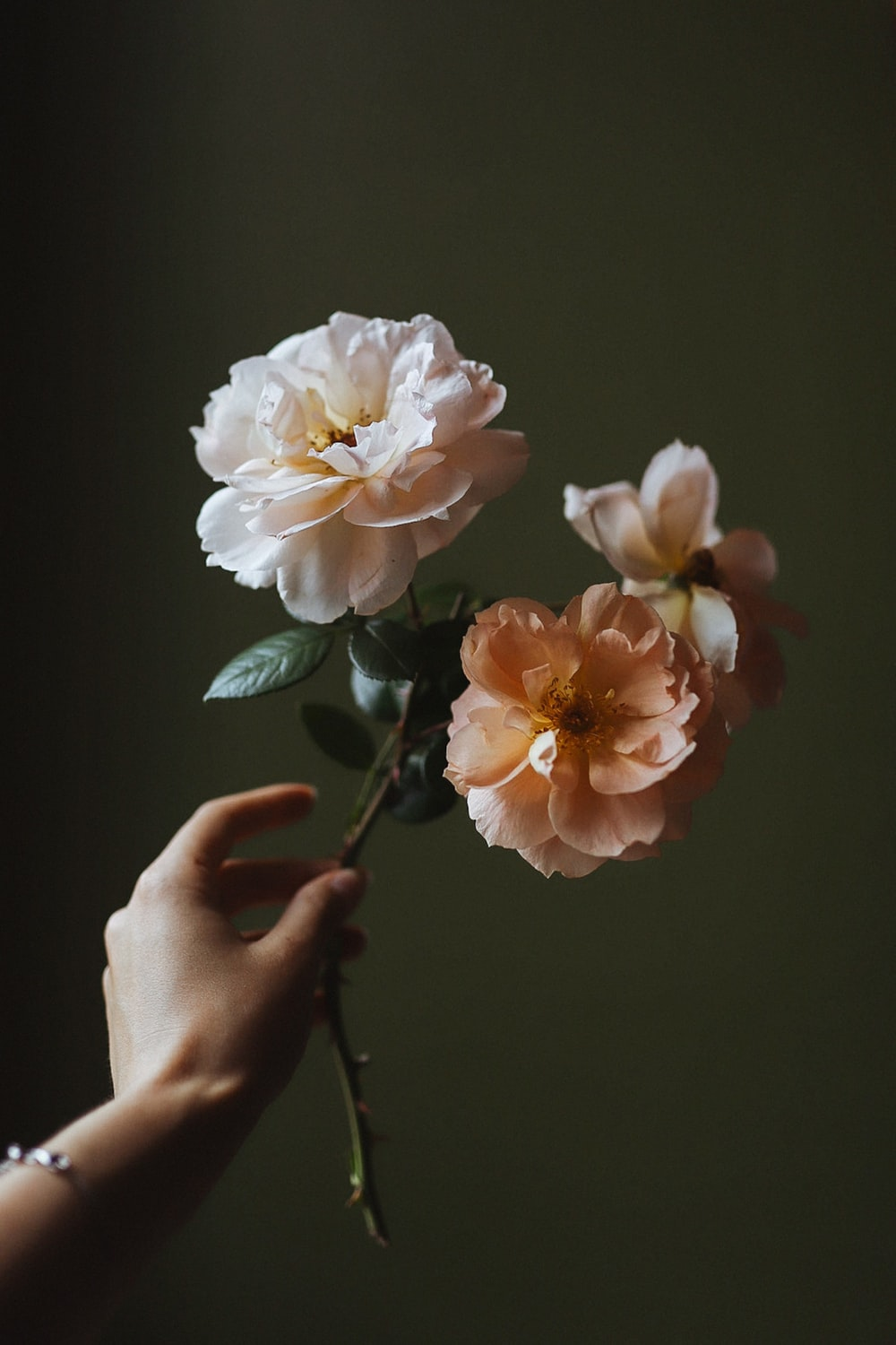 person holding white and pink flower